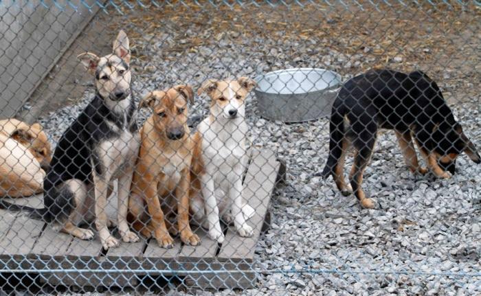 собаки в приюте