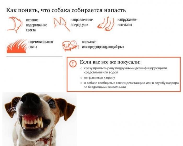 плохое настроение у собаки