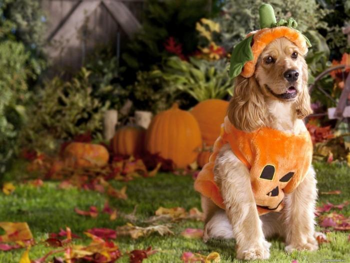 к Хэллоуину готов!