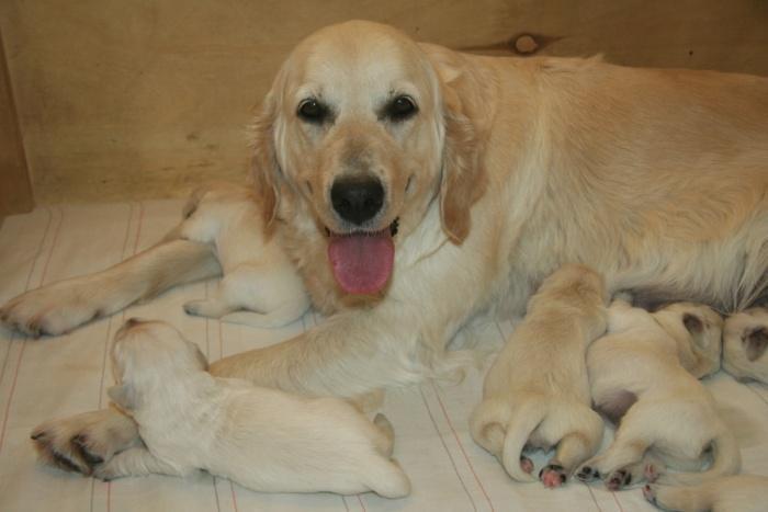 кормящая мамочка