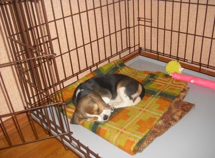 клетка для щеночка