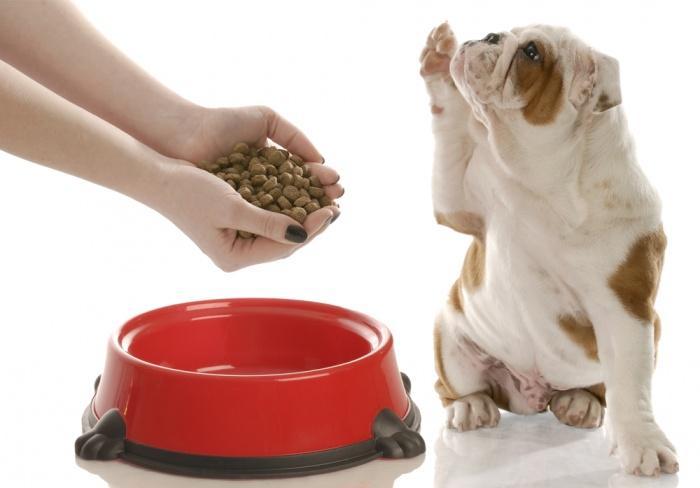 Правильное питание собаки
