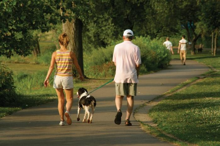 собака гуляет с хозяином