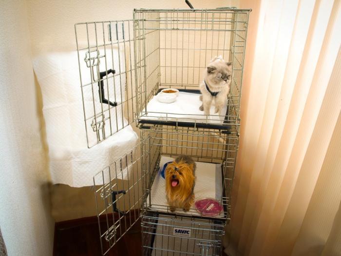 собака в ветклинике