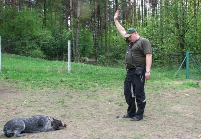 дрессировка охотничьей собаки
