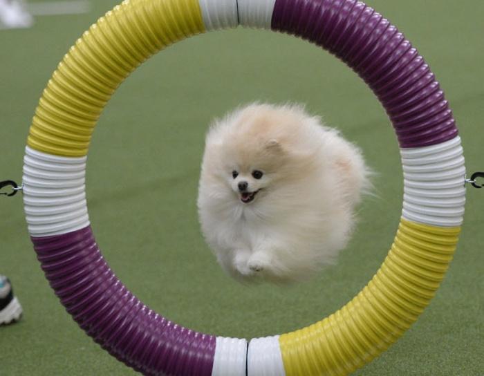 прыжки через кольцо