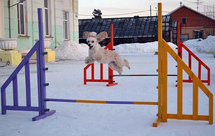 Как сделать барьер для собаки - Pressmsk.ru