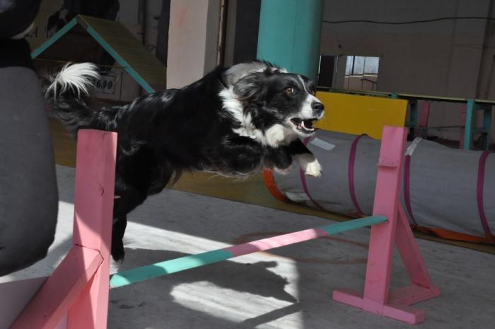 прыгающая спортсменка