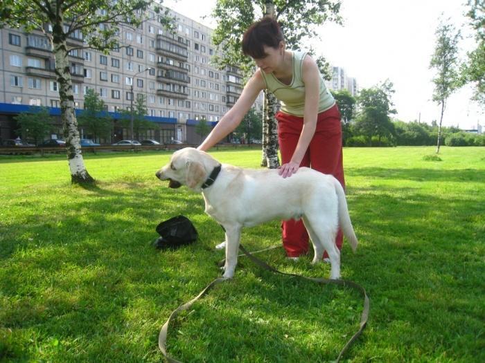 дрессировка собаки на прогулке
