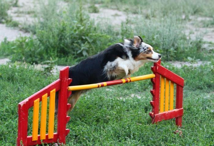 прыжок через препятствие