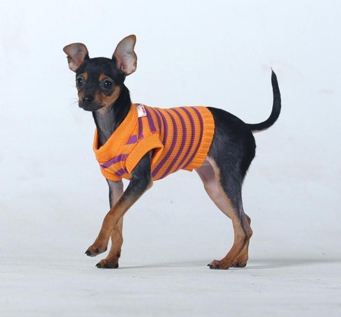 модник в свитерке