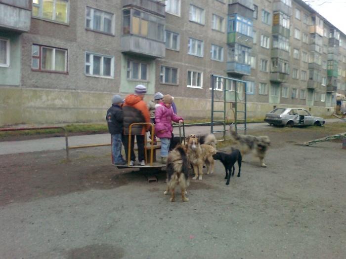 собаки окружили детей
