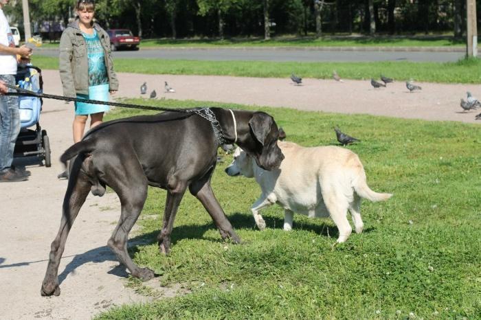с собакой нужно гулять на поводке