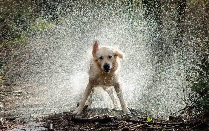 собака стряхивает воду