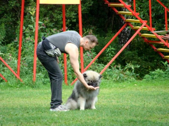 дрессировка собаки - поощрение