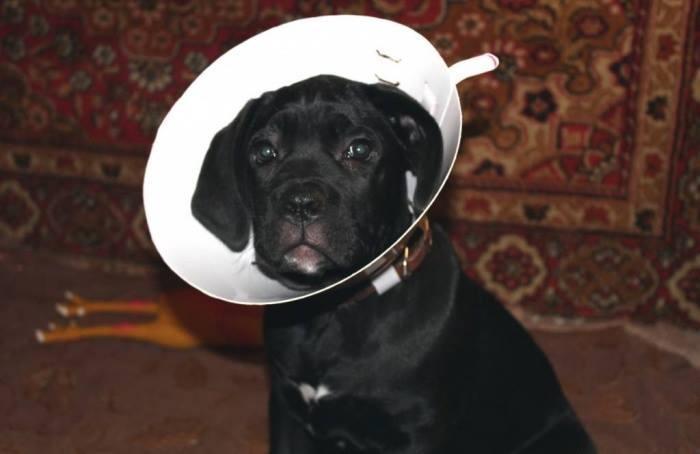 Воротник после операции