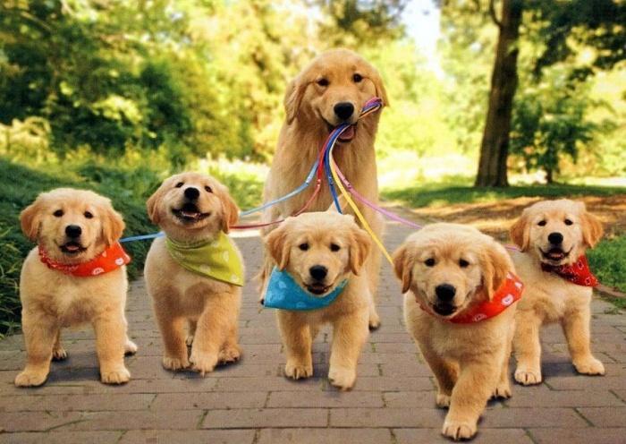 семья на выгуле