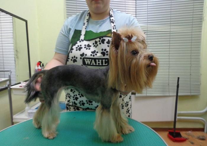 собачий парикмахер