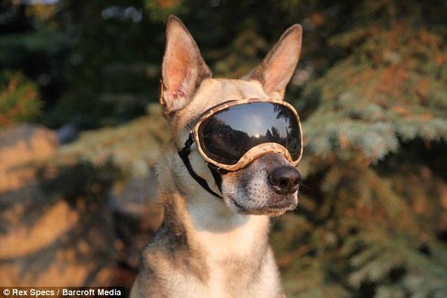 Появились солнцезащитные очки для собак за $80