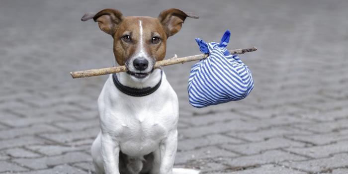 Твиттер поможет владельцам найти своих собак