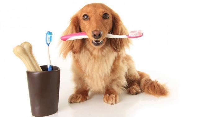 Крепкие зубы собаки