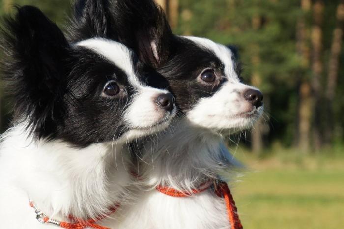 Питомник для собак