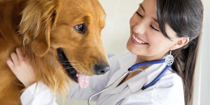 Прием собаки у ветеринара
