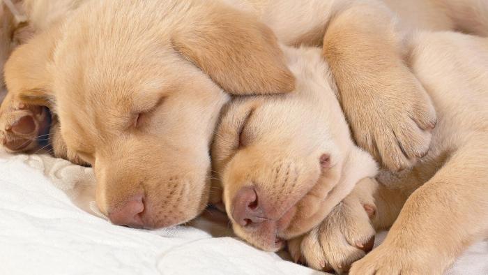 Собака-мама со щенками