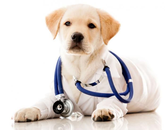 Лечение стоматита у собак