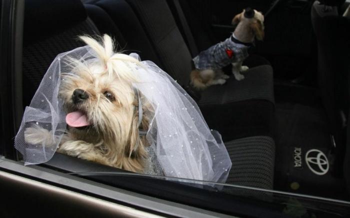 Любая невеста прекрасна! А эта - особенно!