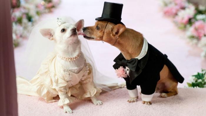 Объявляю вас мужем и женой! Жених может поцеловать невесту!