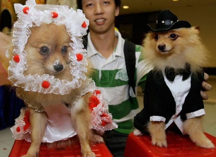 Как бы сказали гости на свадьбе у людей? ПРЕКРАСНАЯ ПАРА!