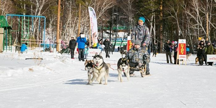 Любимые соревнования на севере - гонка на собачьих упряжках