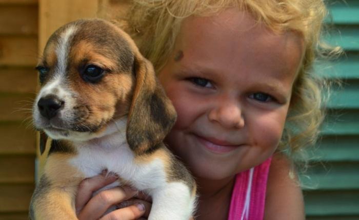 Дети обожают эту породу собак!Только человек, у которого есть собака, чувствует себя человеком.
