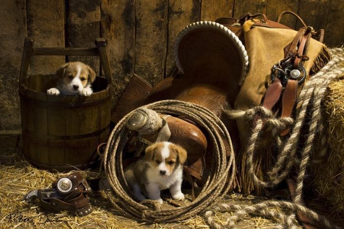 Когда потреплют нас в житейской драке и кажется- напастям нет конца, зализывают раны нам собаки и слезы слизывают с нашего лица.