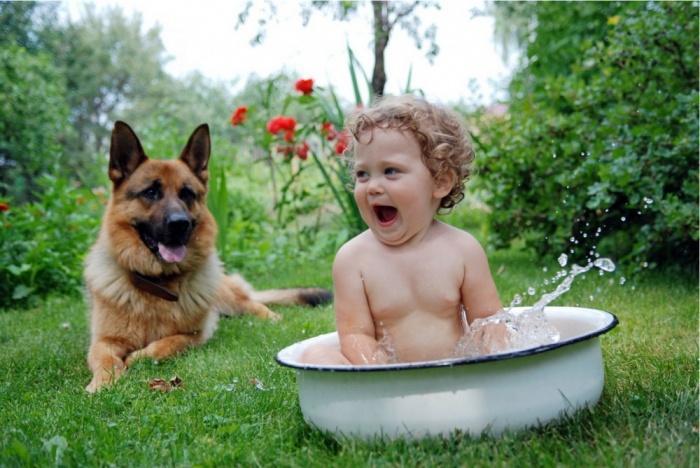 Овчарка своим хозяевам, а особенно детям.Лучшее, что есть у человека, — это собака.