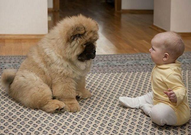 Осторожно! Собака не злая, но принципиальная.