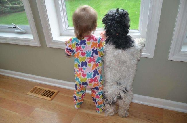 Мы знаем — не редко собака Любимого друга честней, И приятно любить собаку - Никто не ревнует к ней!
