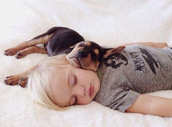 Заведи собаку, она подарит чувства, Помести её в сердце — и там уже не пусто.