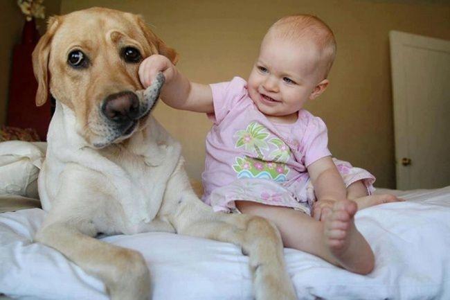 Собака создана специально для детей. Она олицетворение шалости.
