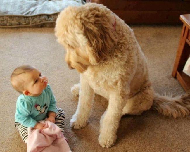 Хотите, чтобы Вас понимали, преданно смотрели в глаза и ни чего не просили взамен?  Купите собаку!
