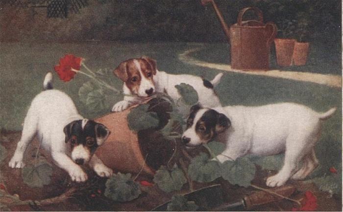 Собаки разносят сад, пока никто не видит