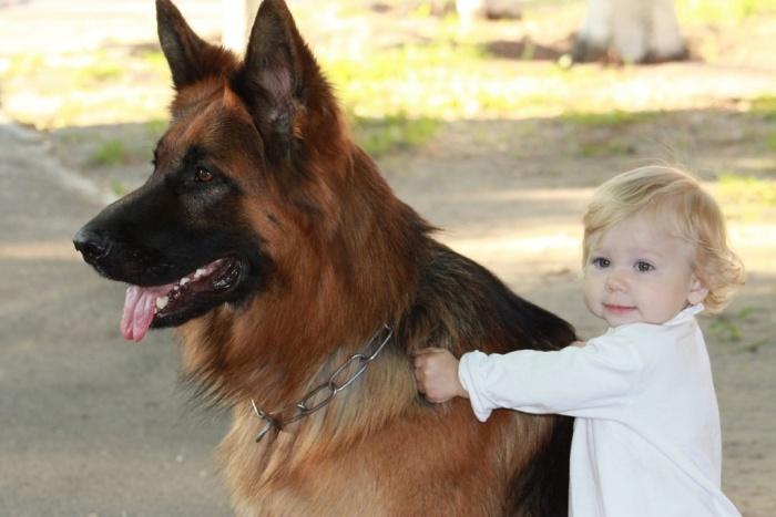Мой верный пес...и конь тоже!