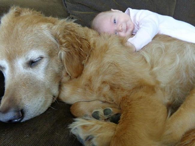 Это моя собака и я ее люблю!!!!