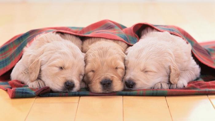 Три уставших маленьких мушкетера!