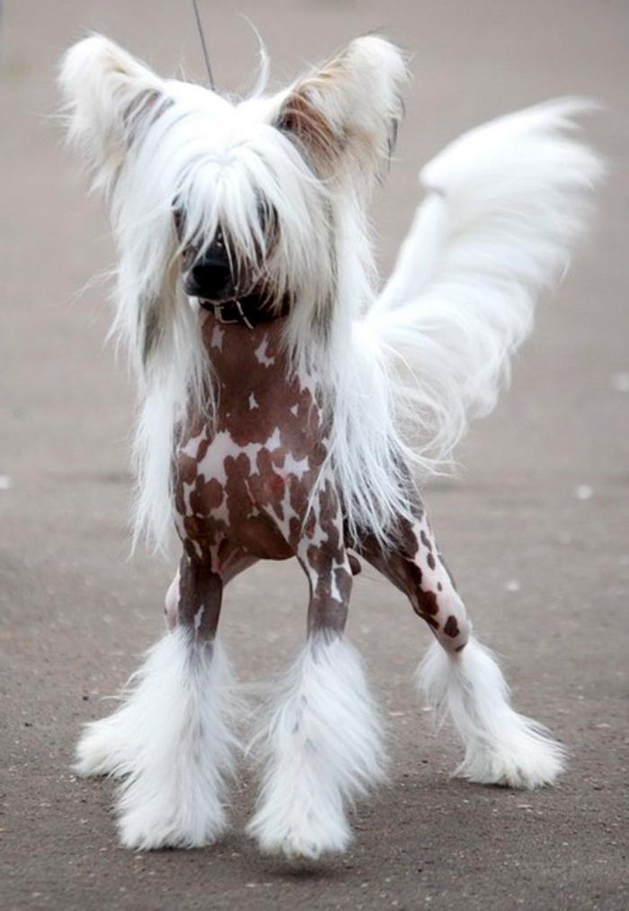 Собаки с человеческим волосом