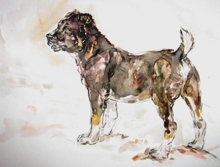Елена Стенякина. Отарные собаки Таджикистана