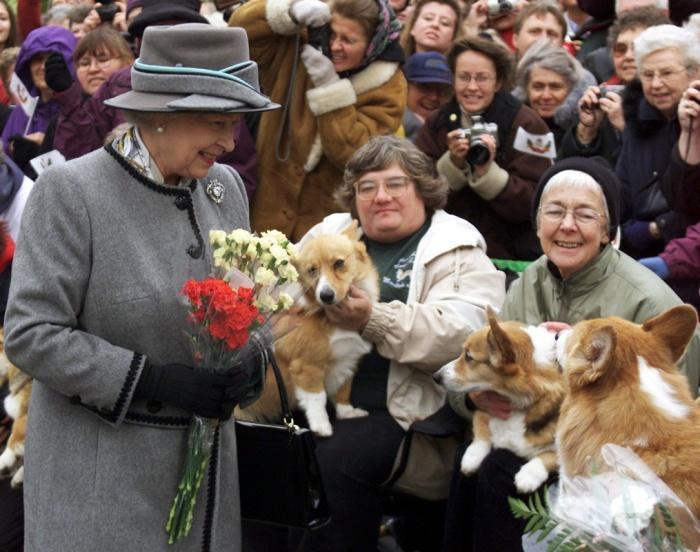 Королева Елизавета предана одной породе собак