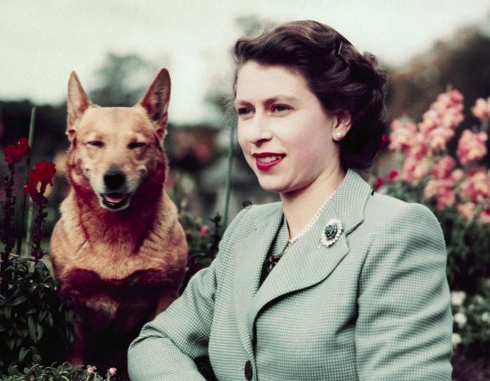 Королева Елизавета любит собак с юности