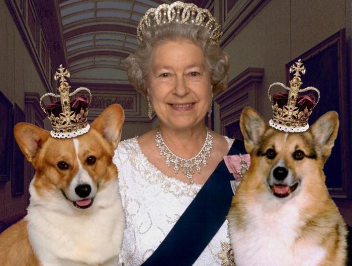 Любимцы королевы!
